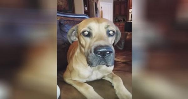 Τρελό γέλιο: Ο ένοχος σκύλος που δε θέλει να δείξει τι έκανε με το σάντουιντς της ιδοκτήτριάς του!