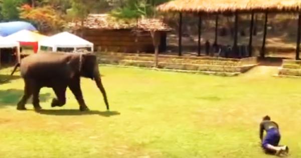 Αυτός ο ελέφαντας βλέπει από μακρυά τον εκπαιδευτή του να δέχεται επίθεση. Δείτε την άμεση αντίδρασή του!
