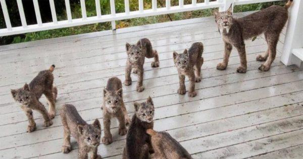 Ένας άντρας ξύπνησε το πρωί και είδε αυτά τα πλάσματα στην βεράντα του (pics)