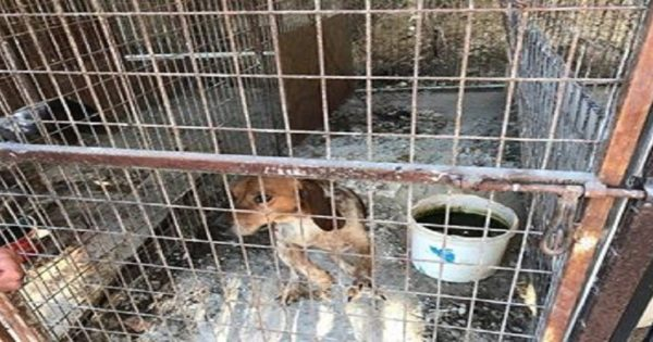 Πάφος:Πόλεμος για τους 10 σκύλους-Κλάπηκαν ή ελευθερώθηκαν;