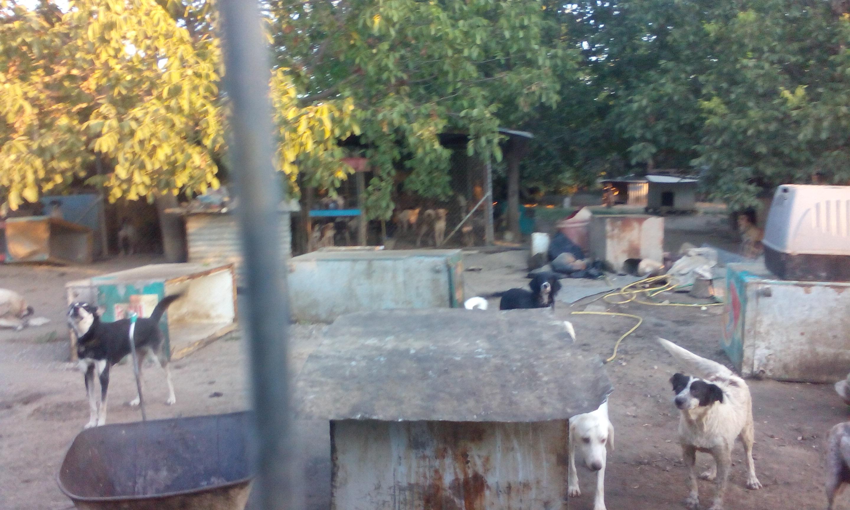 ΠΦΠΟ Κυνοκομείο Σπάρτης καταγγελία κακοποίηση σκύλων