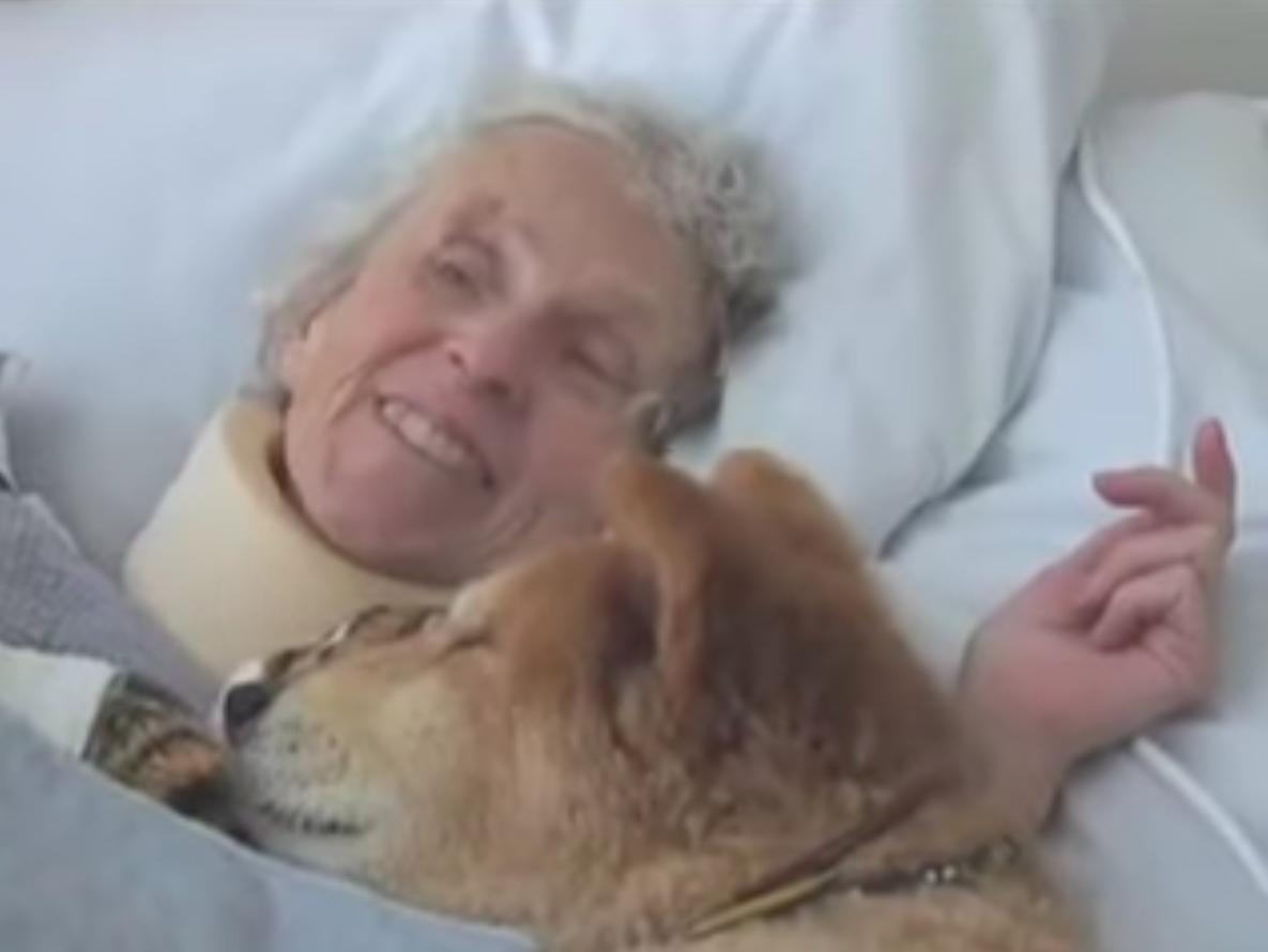 σκύλος θεραπείας