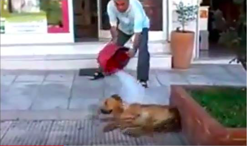 φαρμακοποιός κακοποίηση ζώων