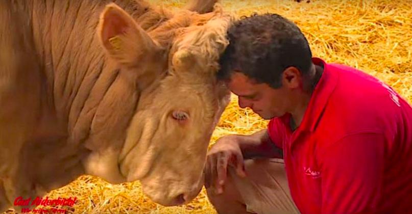 ταύρος διάσωση ζώων απελευθέρωση ζώων