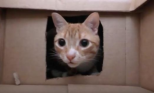 Ιδιοκτήτης γάτας φτιάχνει λαβύρινθο με 50 κουτιά και γίνεται viral