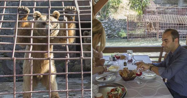 Αρκούδες που λιμοκτονούν βλέπουν οικογένειες να γευματίζουν από τα παράθυρα εστιατορίου