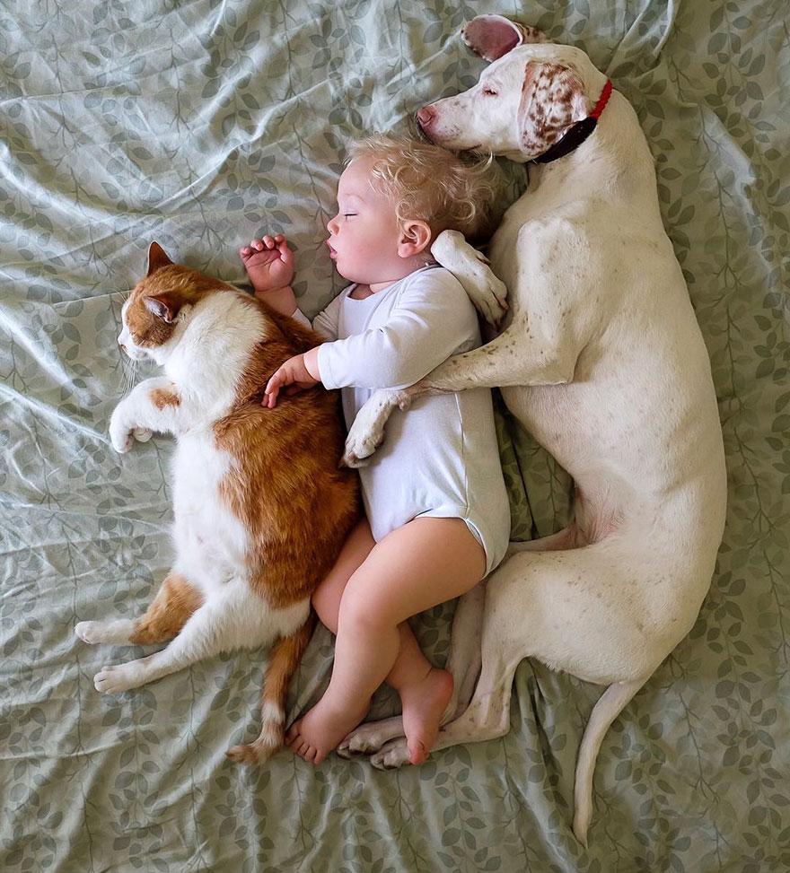 σκύλος και μωρό Σκύλος μωρό