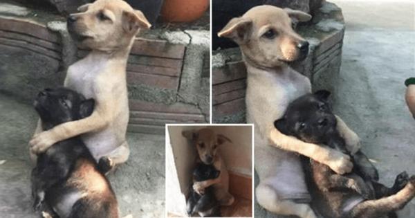 Αδέσποτος σκύλος δεν σταματά να αγκαλιάζει τον φίλο του όταν τους έσωσαν από τους δρόμους