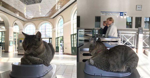 Η γάτα-μασκότ του Ηλεκτρικού στο Μοναστηράκι που αράζει πάνω στα ακυρωτικά μηχανήματα