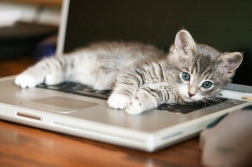 συμβίωση με γάτα γάτες Γάτα