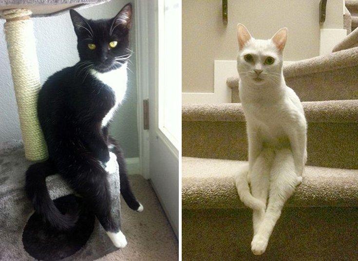 γάτες Γάτα