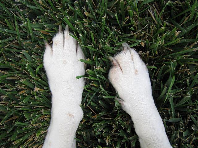 Σκύλος κοπέλα