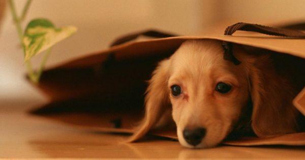 Τα παράτησαν στους δρόμους όμως ξαναβρήκαν αγάπη και θαλπωρή- Τρεις σκύλοι με τη… δική τους ιστορία (φωτό)