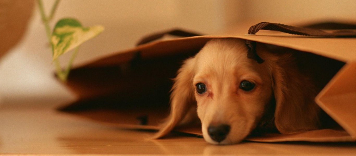 υιοθεσία αδέσποτων Παγκόσμια Ημέρα των Ζώων Αδέσποτα