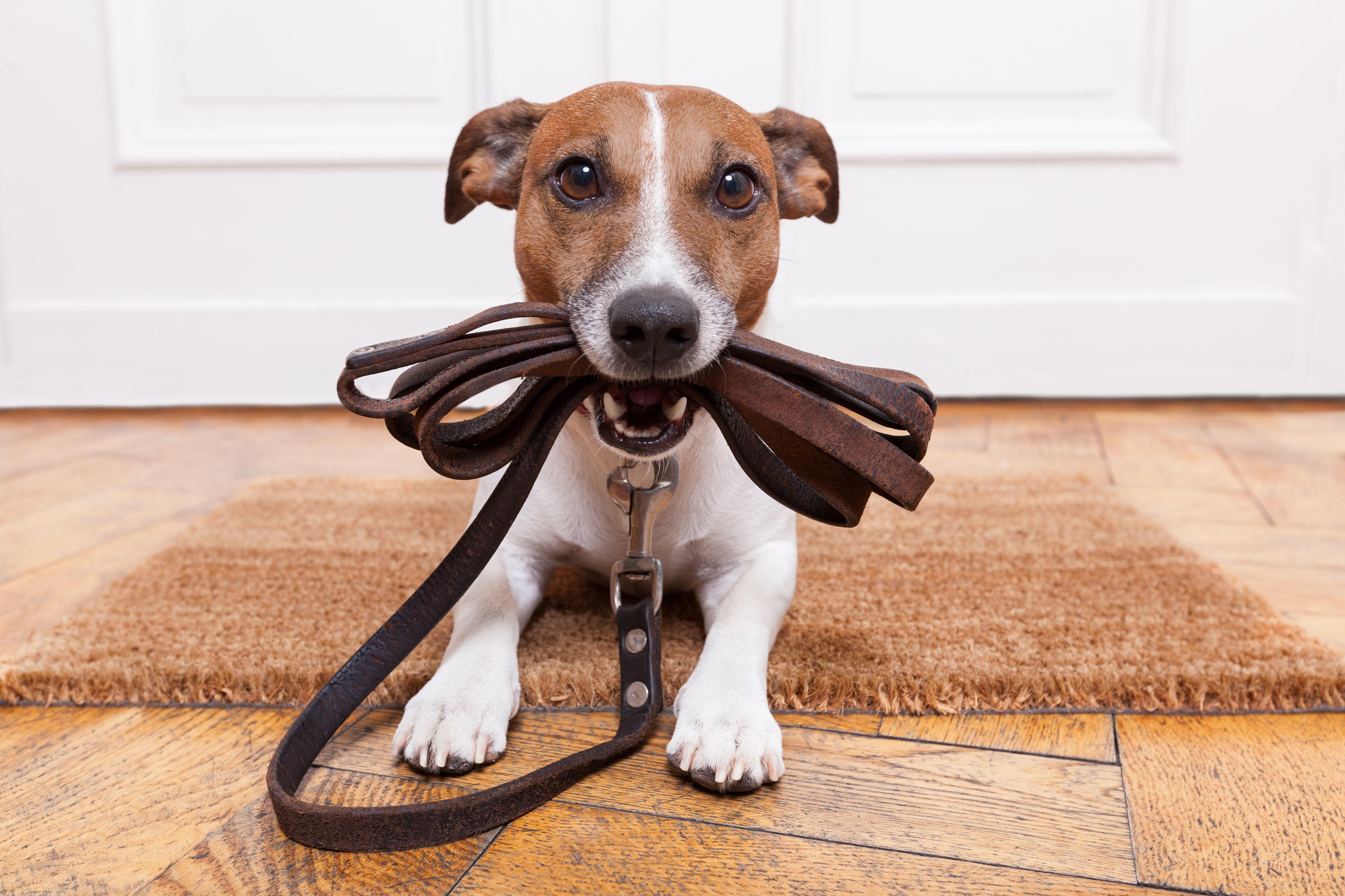 σκύλος βόλτα συμβουλές σκύλος βόλτα Σκύλος