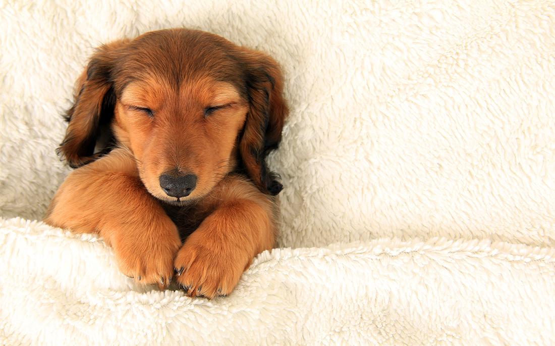 σκύλοι όνειρα