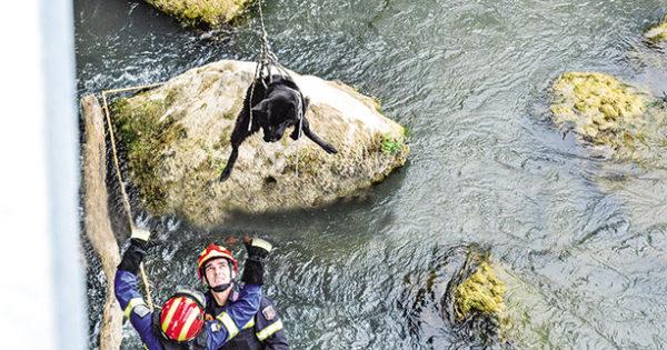 Πυροσβέστες απεγκλώβισαν από τον Αλφειό ποταμό ημίαιμο βελγικό ποιμενικό