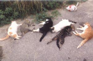 Νέα Σμύρνη καταγγελία δηλητηρίαση ζώων