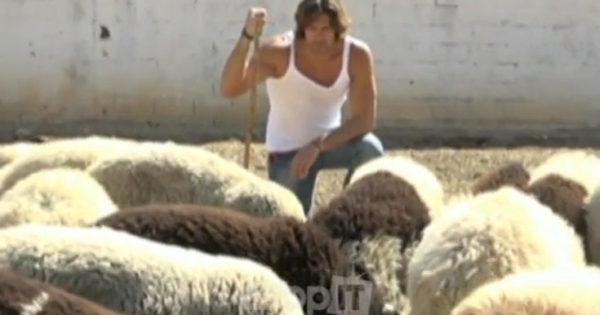 Ο «τσέλιγκας» Γιάννης Σπαλιάρας σκάβει, οργώνει και βόσκει πρόβατα