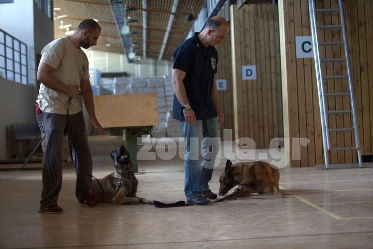 σκυλιά αστυνομίας Οι τετράποδοι αστυνομικοί που μυρίζονται το έγκλημα