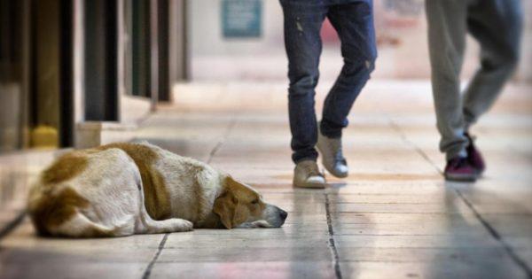 Π.Φ.Π.Ο.: Σε αντιφιλοζωική κατεύθυνση κινείται η επικείμενη τροποποίηση της νομοθεσίας για την προστασία των ζώων