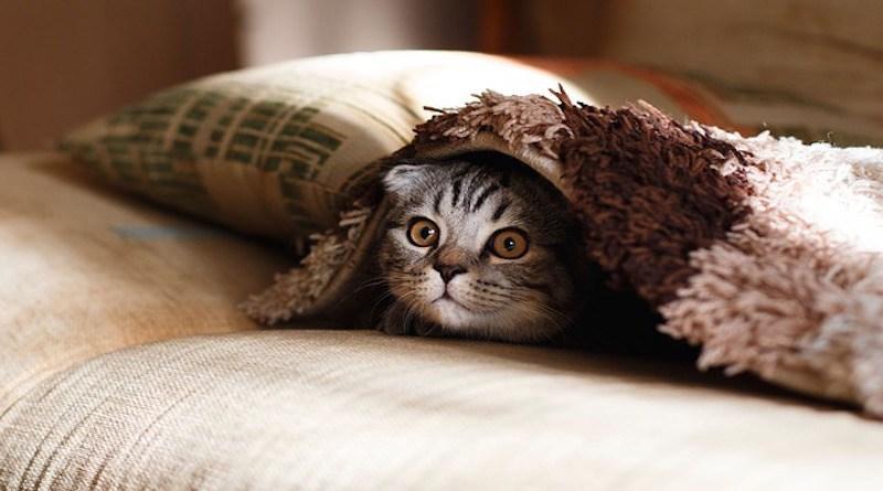 Γάτες και δημόσια υγεία: Mύθοι και πραγματικότητες γάτες δημόσια υγεία γάτες αδέσποτες γάτες