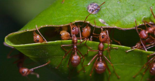 Κανείς δεν περίμενε από τα εργατικά μυρμήγκια να κάνουν συστηματικά αυτό