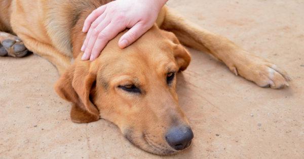 Το άγνωστο ψυχικό κόστος της φροντίδας ενός άρρωστου κατοικίδιου ζώου