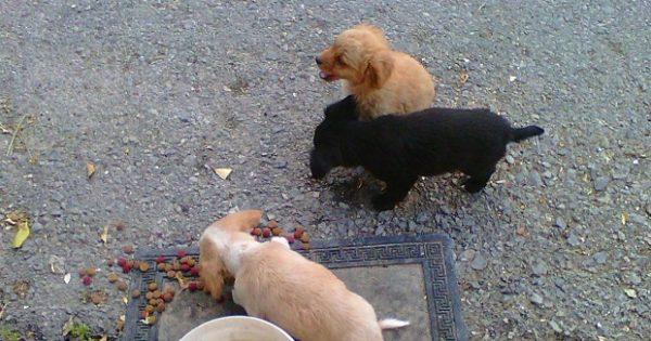 «Ευαίσθητοι φιλόζωοι» του Ηρακλείου: Πέταξαν νύχτα στο δρόμο τα τρία σκυλάκια για να μην είναι «βάρος»- Ποιος θα τα σώσει; (φωτο)