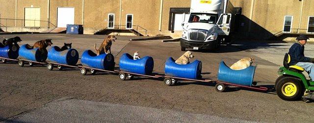 τρενάκι για αδέσποτα Σκύλος σκύλοι σκυλάκια αδέσποτα σκυλάκια αδέσποτο Αδέσποτα