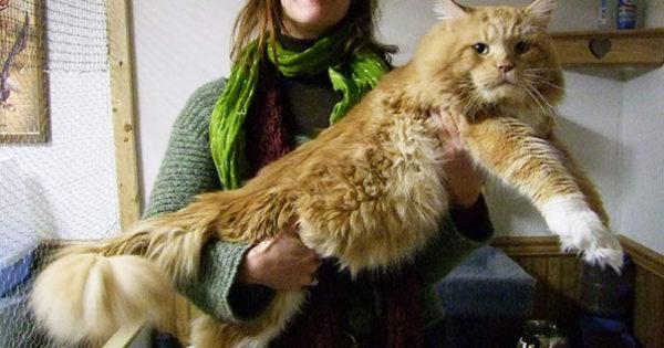 Αυτές είναι οι μεγλύτερες γάτες που έχετε δει ποτέ!