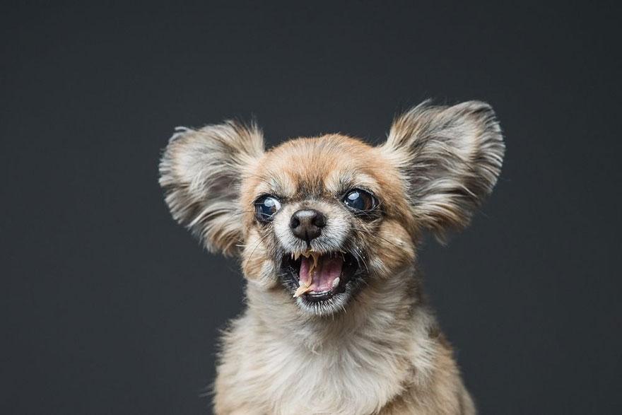 φυστικοβούτυρο Σκύλος