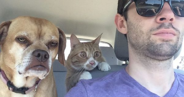 Δραματικές αντιδράσεις γατών που αξίζουν Όσκαρ!