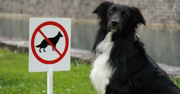Όταν τα ζώα δεν ακολουθούν τους κανόνες (εικόνες)