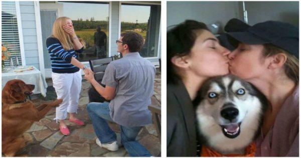 25 θεότρελοι σκύλοι που πετάγονται από το πουθενά και καταστρέφουν φωτογραφίες