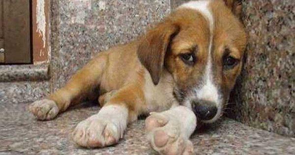 Έβαλαν μια κρυφή κάμερα σε ένα αδέσποτο σκύλο. Αυτό που κατέγραψαν, ραγίζει καρδιές…