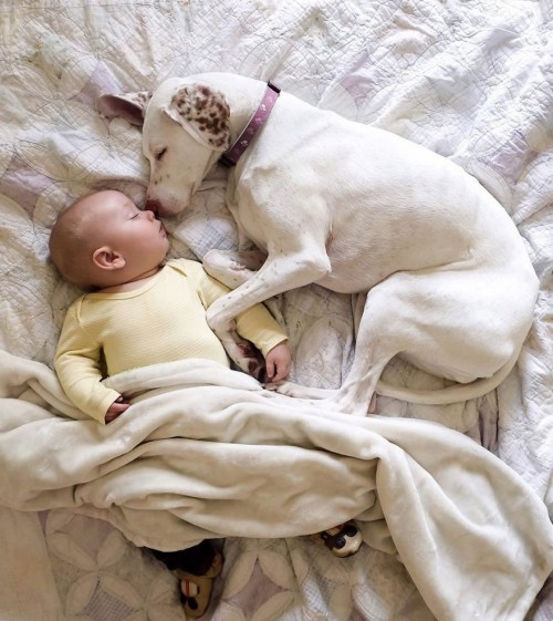 1271809_abused-rescue-dog-love-child-nora-elizabeth-spence-40_1