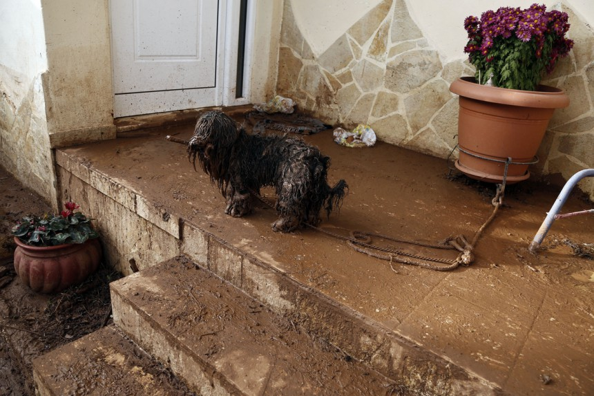 Σκύλος Μάνδρα πλυμμήρες Μάνδρα διάσωση σκύλων