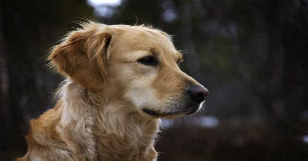 Οι 5 καλύτερες ράτσες σκύλων για οικογένειες με μικρά παιδιά