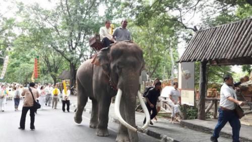 προβοσκίδα ελέφαντας σκότωσε ελέφαντας