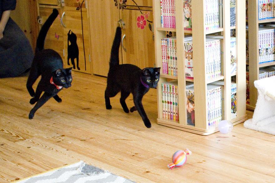 Μαύρες γάτες καφέ για τις μαύρες γάτες καφέ γάτες
