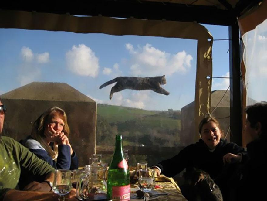 φωτογραφίες ζωάκια φωτογραφίες ζωάκια photobombs ζωάκια