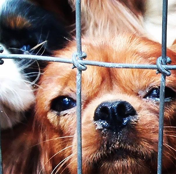 σκυλιά εκτροφείο σκυλιά