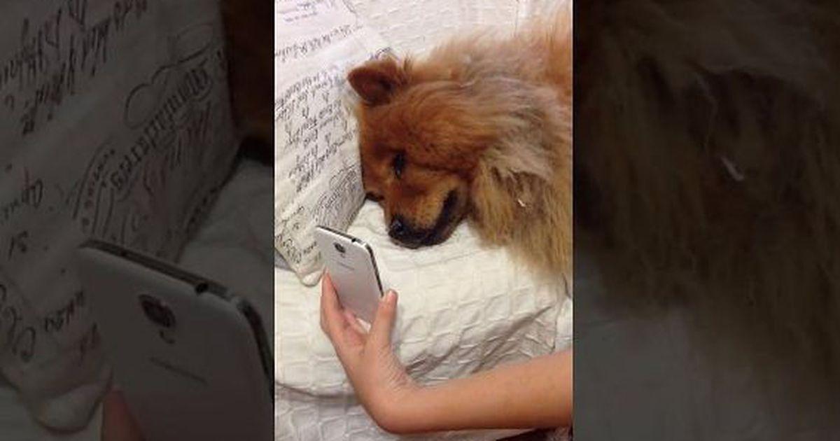 Σκύλος βιντεοκλήση
