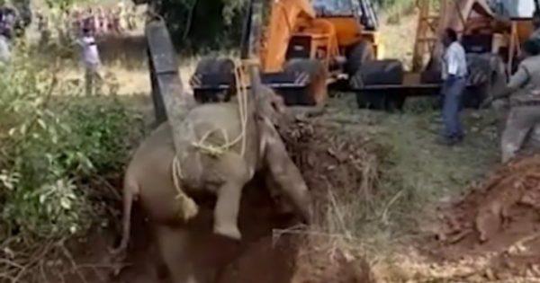 Βίντεο καταγράφει καρέ καρέ την δραματική διάσωση ελεφαντίνας που είχε παγιδευτεί σε πηγάδι