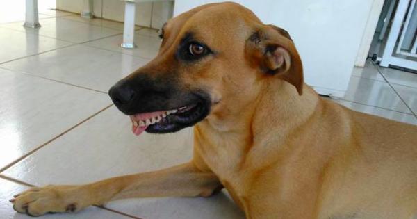 Δεν θα πιστέψετε τι βρήκε ένας τύπος στο στόμα του σκύλου του!!!