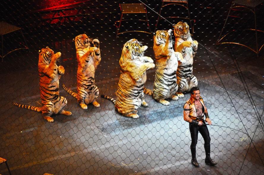 τσίρκο ζώα σε τσίρκο