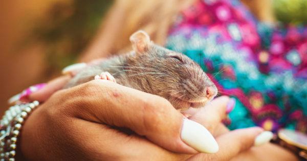 Ποντίκια εργαστηρίου βγαίνουν για πρώτη φορά έξω και οι εκφράσεις τους τα λένε όλα