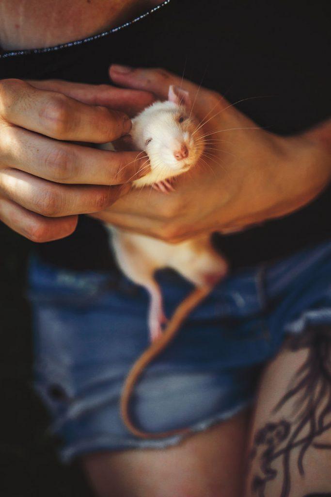 ποντίκια εργαστηρίου ποντίκια