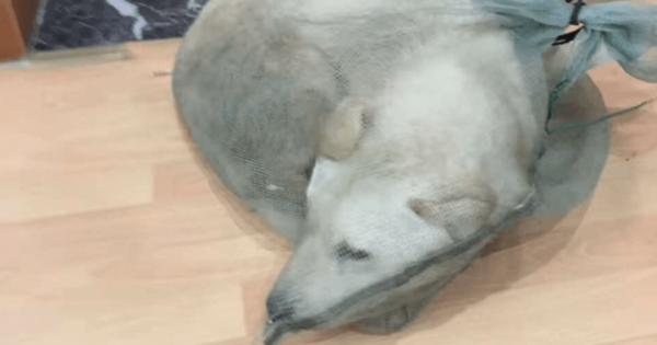 Άνδρας έσωσε σκύλο που τον είχαν συσκευάσει με σκοπό να τον πουλήσουν για το κρέας του
